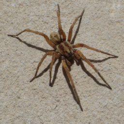 Уничтожение пауков в Воронеже